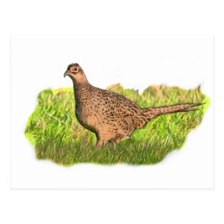 Female Pheasant in the grass Postcard