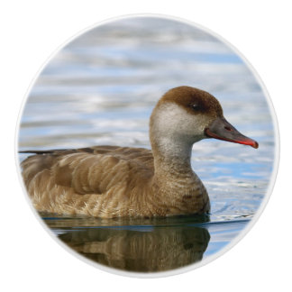Female pochard duck, netta rufina ceramic knob
