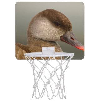 Female pochard duck, netta rufina mini basketball hoop