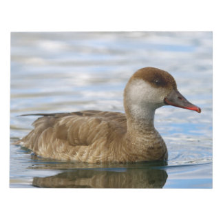 Female pochard duck, netta rufina notepad