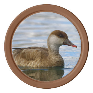 Female pochard duck, netta rufina poker chips