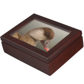 Female pochard duck, netta rufina, portrait keepsake box