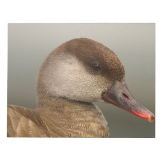 Female pochard duck, netta rufina, portrait notepads