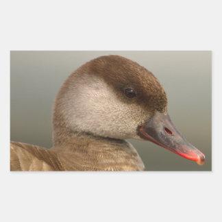 Female pochard duck, netta rufina, portrait rectangular sticker