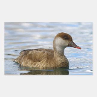 Female pochard duck, netta rufina rectangular sticker