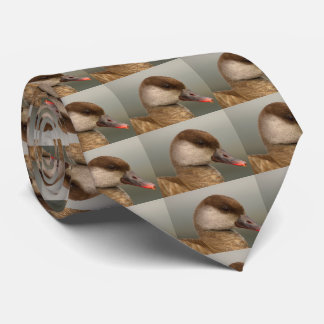 Female pochard duck, netta rufina tie