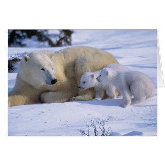 Female Polar Bear Lying Down with 2 coyscubs Card