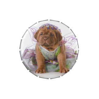 Female Puppy - Dogue De Bordeaux Puppy Jelly Belly Candy Tin
