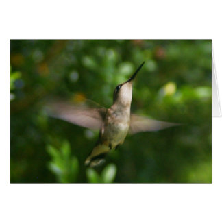 Female Ruby Throat Hummingbird Card