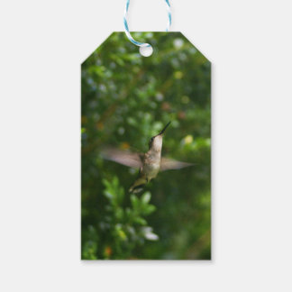 Female Ruby Throat Hummingbird gift tag