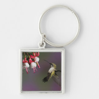 Female Ruby throated Hummingbird in flight. Keychains