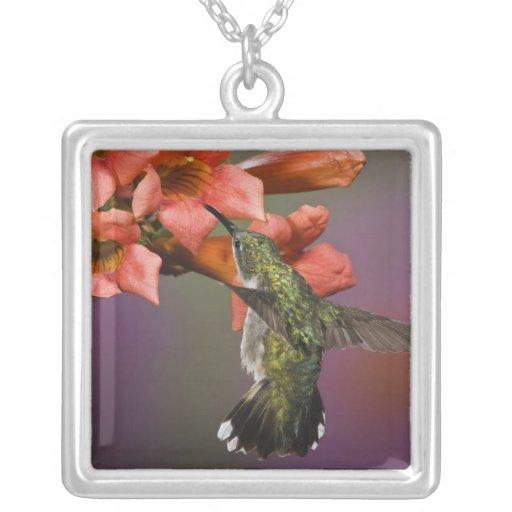 Female Ruby Throated Hummingbird in flight, Custom Jewelry