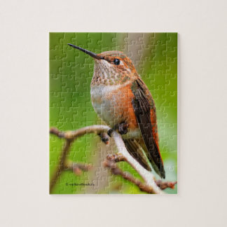 Female Rufous Hummingbird on the Plum Tree Puzzle