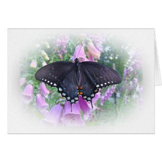 Female Spicebush Swallowtail Butterfly Card