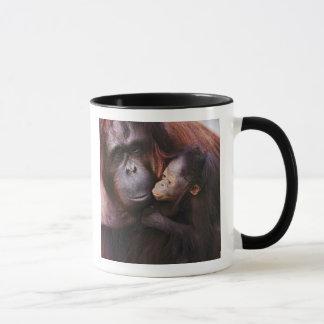 Female Sumatran Orangutan with baby, Pongo