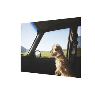 Female Terrier X sitting if front seat of Canvas Print