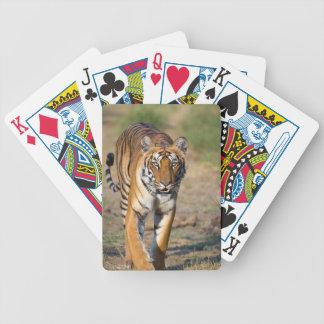 Female Tigress Stalking Prey Bicycle Playing Cards