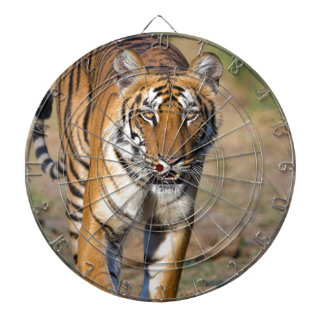 Female Tigress Stalking Prey Dartboard