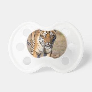 Female Tigress Stalking Prey Dummy