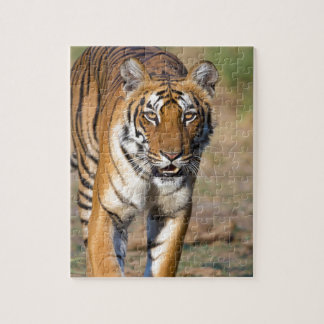 Female Tigress Stalking Prey Jigsaw Puzzle