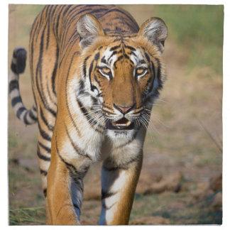 Female Tigress Stalking Prey Napkin