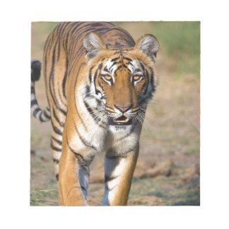 Female Tigress Stalking Prey Notepad
