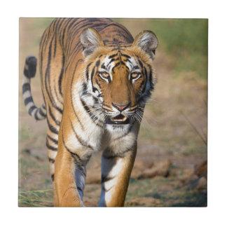 Female Tigress Stalking Prey Small Square Tile