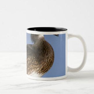 Female wood duck, Canada Two-Tone Mug