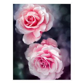 Feminine Pink Roses Floral Photo Postcard