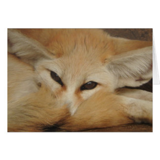 Fennec Fox Greeting Card