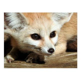 Fennec Fox Postcard