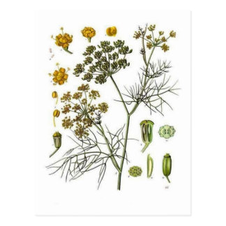 Fennel Post Cards