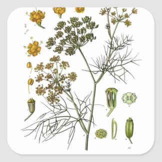 Fennel Square Sticker