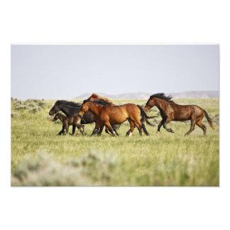 Feral Horse Equus caballus) herd of wild Art Photo
