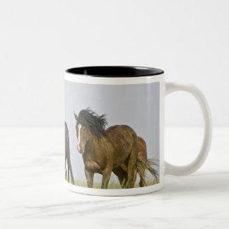 Feral Horse Equus caballus) wild horses 3 Two-Tone Coffee Mug