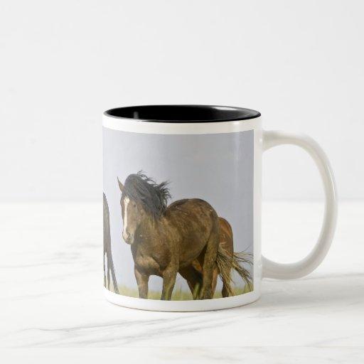 Feral Horse Equus caballus) wild horses 3 Coffee Mug