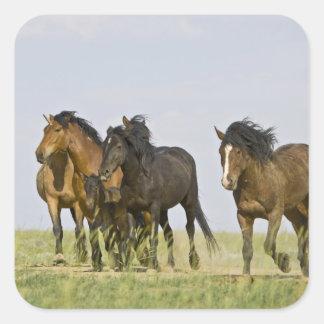 Feral Horse Equus caballus) wild horses 3 Square Sticker