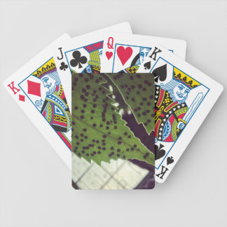 fern bicycle playing cards