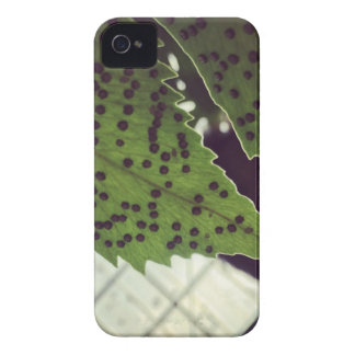 fern Case-Mate iPhone 4 case