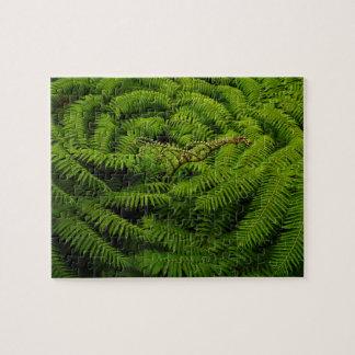Fern Fine Art Photograph Puzzles