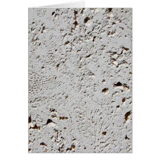 Fern Fossil Tile Surface Closeup Card