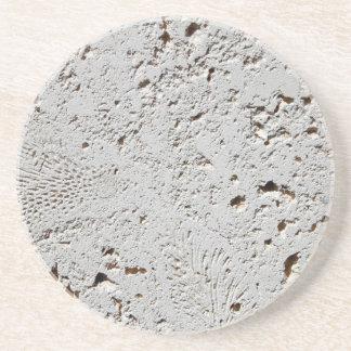 Fern Fossil Tile Surface Closeup Coaster
