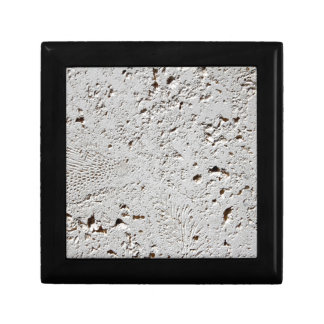 Fern Fossil Tile Surface Closeup Gift Box