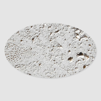 Fern Fossil Tile Surface Closeup Oval Sticker