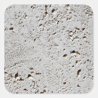 Fern Fossil Tile Surface Closeup Square Sticker