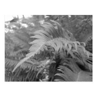 Fern Friendly Postcard