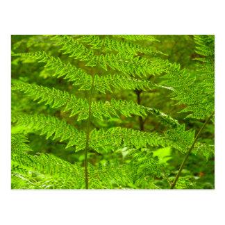 Fern Fronds III Green Nature Postcard
