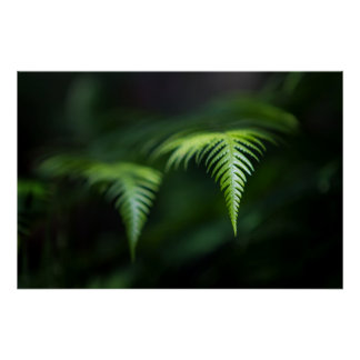 Fern in Dappled Sunlight Poster