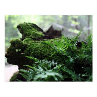 Fern & Moss Postcard