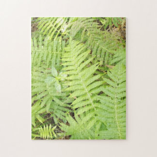 Fern Puzzle